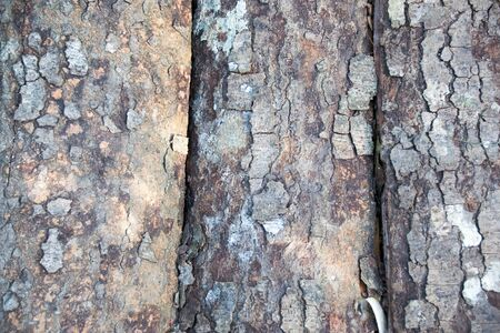 bark background: Close Bark sheet nature abstract background Stock Photo