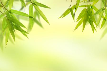 zen attitude: feuilles de bambou et le fond vert lumière douce