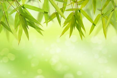 bambou: feuilles de bambou et le fond vert lumière douce