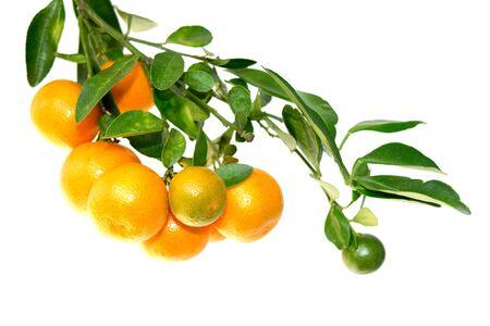 juicy: Orange fruit and green leaf isolate on white background