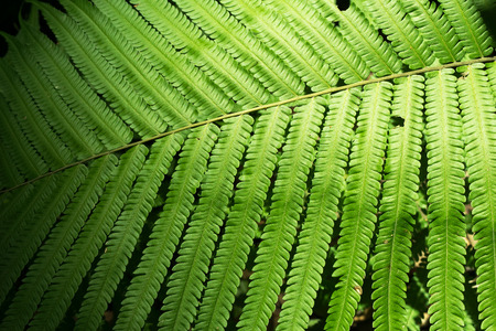 brake fern: leaf of fern is close-up background Stock Photo