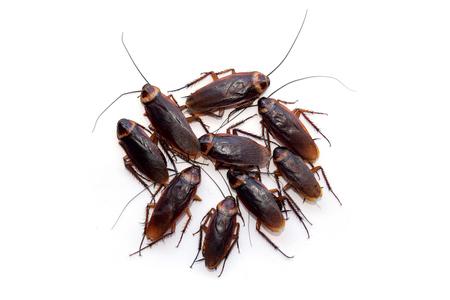 Groep lopen kakkerlak isoleren op een witte achtergrond