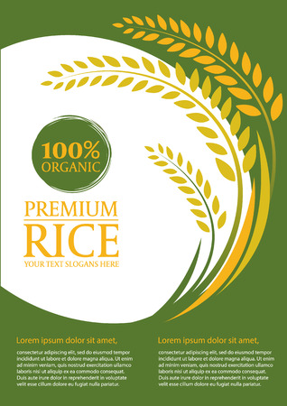rice plant: Paddy rice and green background - Layout template size A4 design