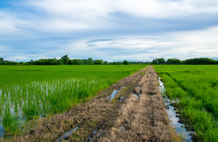 india food: Landscape - Road and Green rice field and sky in thailand