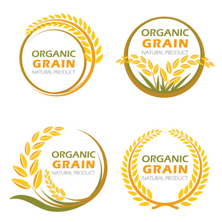 rice grain: Circle paddy rice organic grain products and healthy food vector set design