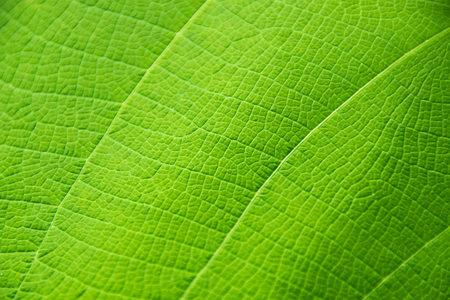 close up green leaf texture for wallpaper background