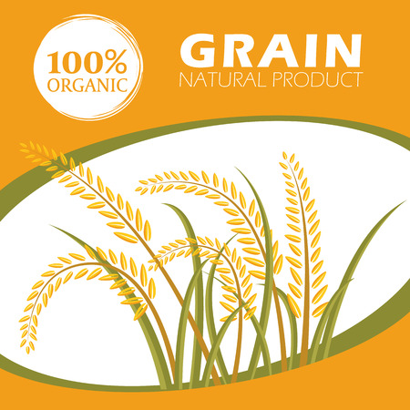 grain fields: Paddy rice organic grain products - Layout template Vector design