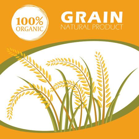 produits céréaliers: Paddy riz produits céréaliers biologiques - modèle Mise en page Vector design Illustration