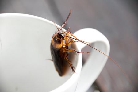 흰색 컵 입에서 바퀴벌레를 닫습니다. 스톡 콘텐츠