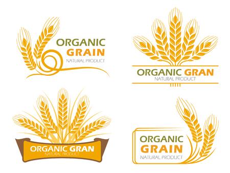 黄色水田大麦水稲有機穀物製品と健康食品バナー記号のベクトルのセットのデザイン