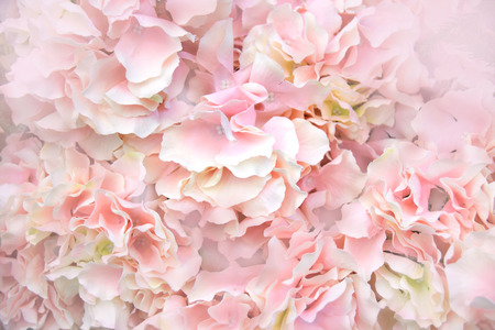 Close up Pink Artificial Flowers soft light abstract background Stock Photo