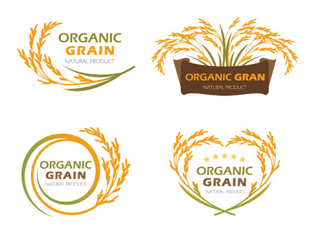 rice plant: Yellow paddy rice organic grain products and healthy food banner sign vector set design