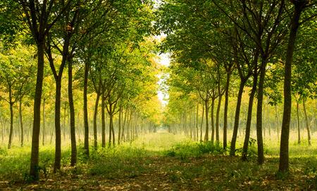 Landschaft - schöne lange Perspektive Palmen Wald Standard-Bild