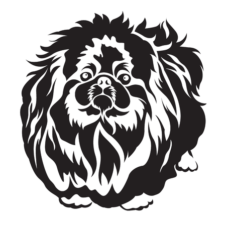 pedigreed dog pekingese breed for tattoo and screen vector design