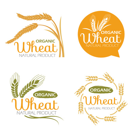 rice paddy: Yellow paddy Wheat rice organic grain products and healthy food banner sign vector set design