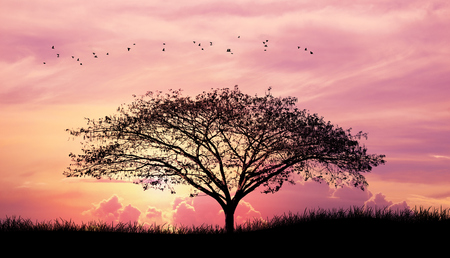 Silhouette tree and grass and bird in Pink purple sky cloud background