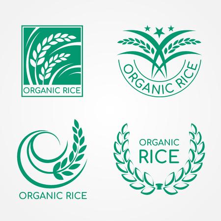 Logotipo de arroz orgánico verde con arroz paddy y diseño vectorial de hoja
