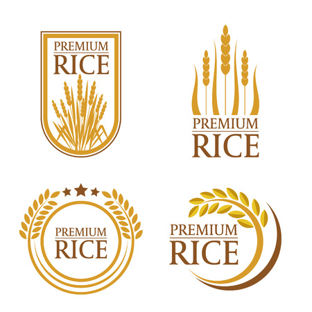 Orange brown paddy premium rice  natural product banner and logo art vector design