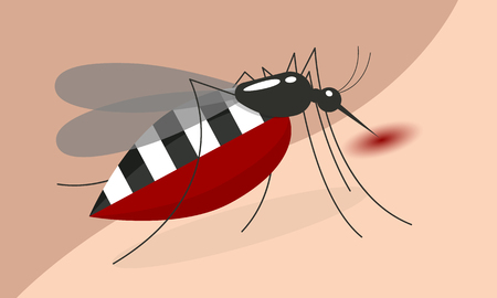 Mosquito Drinking blood on body skin vector design