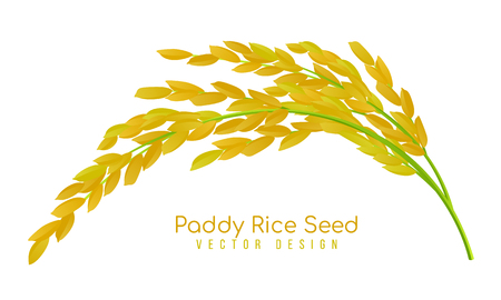 Yellow paddy rice seed vector design