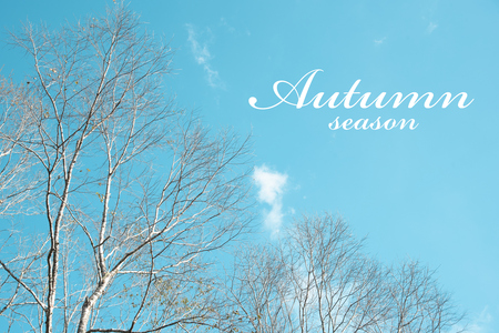 Autumn season concept with Leafless trees and blue sky