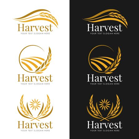 Yellow gold Harvest paddy rice logo vector collection design 向量圖像