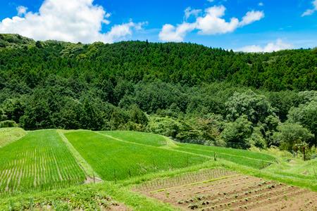 Rice terrace in Izu city, Shizuoka prefecture