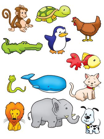 Collection of animal in full color photo