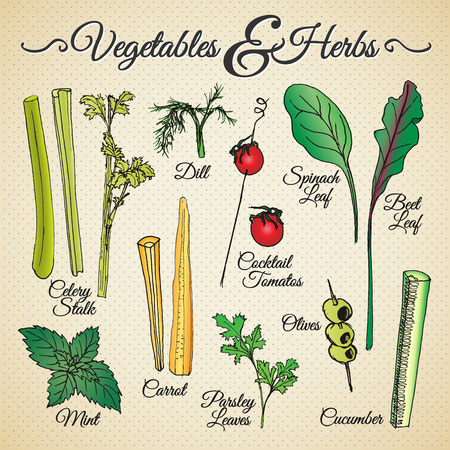 Vegetables and herbs drawings set Vector