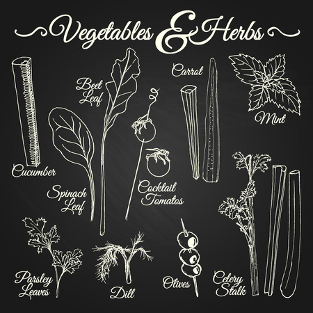 Vegetables and herbs drawings set for different usage Vector