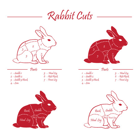 RABBIT meat cuts diagram - red on whiteboard Vector