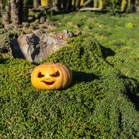 brushwood: Halloween scary pumpkin jack-o-lantern with a smile in green grass and blurred background