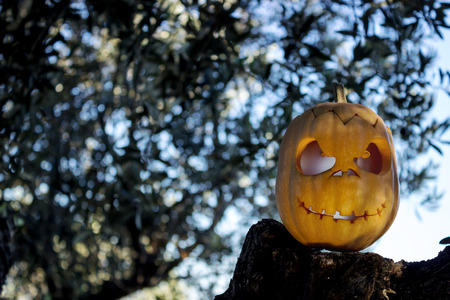 thicket: Halloween scary pumpkin jack-o-lantern with a smile in green tree thicket on the rock reflection