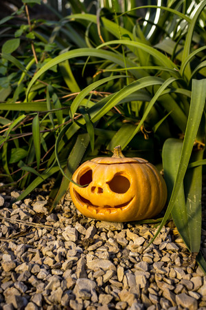 thicket: Halloween scary pumpkin jack-o-lantern with a smile in green grass thicket on the rock