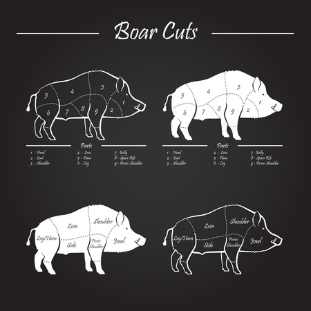 wild hog: Wild hog, boar game meat cut diagram scheme - elements set on chalkboard Illustration