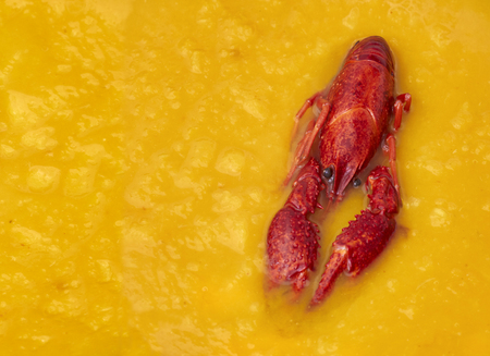riverine: Red river crayfish floating in the fresh orange pumpkin soup