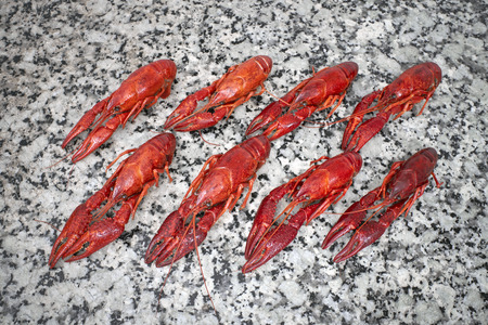fluvial: Red river boiled crayfish in rows on grey kithen granite worktop top view.