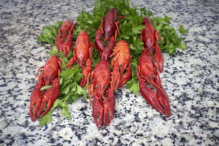 worktop: Red river crayfish on green parsley on kithen grey granite worktop in front perspective
