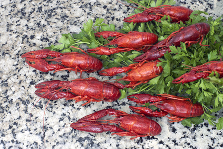 fluvial: Red river crayfish on green parsley on kithen grey granite worktop top view.