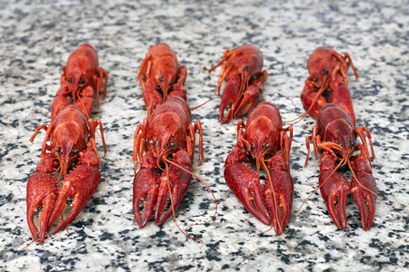 fluvial: Red river boiled crayfish on grey kithen granite worktop in rows front view.