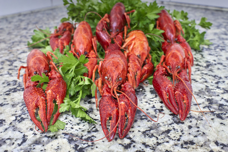 fluvial: Red river crayfish on green parsley on kithen grey granite worktop in front perspective closeup