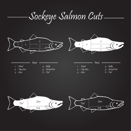 Sockeye Pacific salmon cutting diagram illustration, white on chalkboard