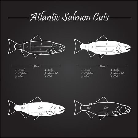 cut: Norwegian Atlantic salmon cutting diagram illustration,on chalkboard