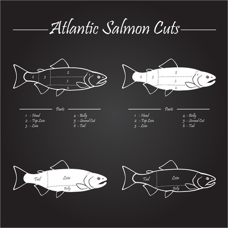 Norwegian Atlantic salmon cutting diagram illustration,on chalkboard