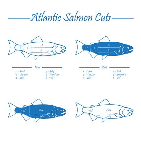atlantic: Norwegian Atlantic salmon cutting diagram illustration, blue on white Illustration