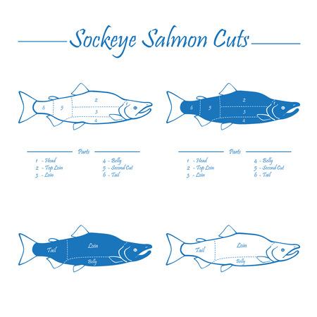 sockeye: Sockeye Pacific salmon cutting diagram illustration, blue on white background