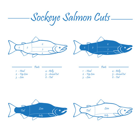 Sockeye Pacific salmon cutting diagram illustration, blue on white background