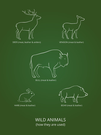 meat icon: Wild live animals poster on green gradient background