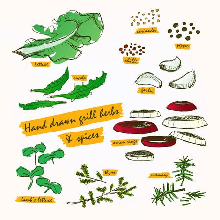 koriander: Hand drawn and paint bbq grill herbs & spices colour with labels Illusztráció