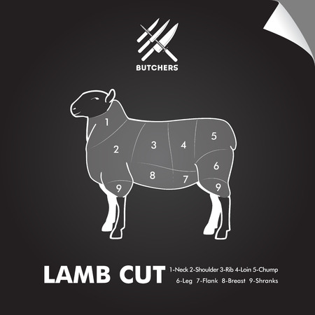 Simply lamb meat cutting diagram on blackboard sheet. Butchers sign.